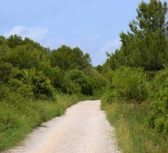 Valencia ruta guiada bicicleta