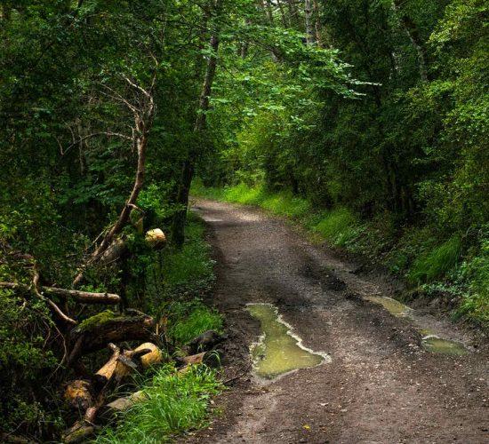 bosque viaje en bicicleta organizado