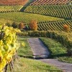 Viñedos de La Rioja en bici viajes cicloturistas Kolotrip